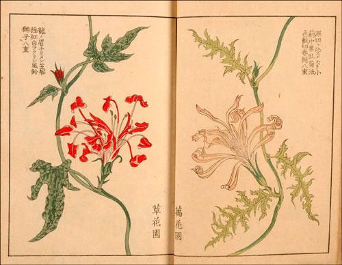Japanese wildflowers