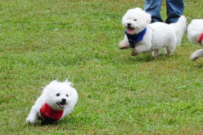 2010 running dogs