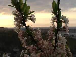 Flowering Sunrise