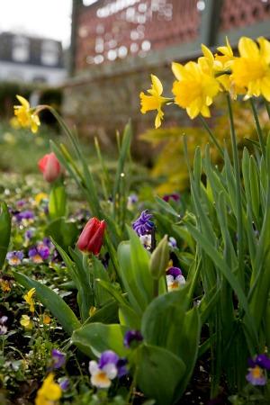 Spring Festival Bulbs