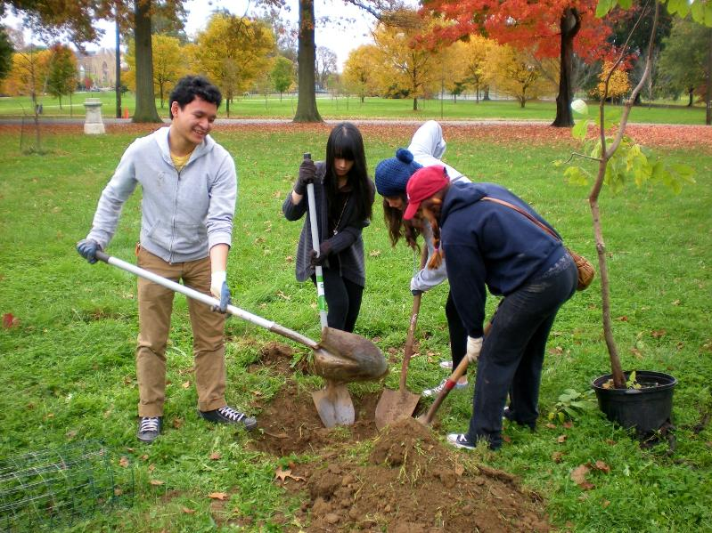 Woodford planting 2012