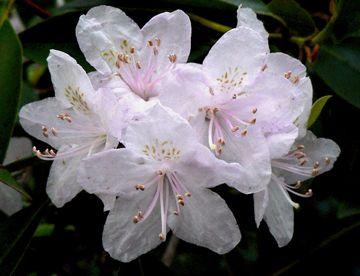 et white flower