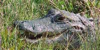 Chark Valley Tours, Miami, Everglades National Park