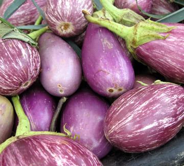 Vendor Story: Fields Farm Fresh