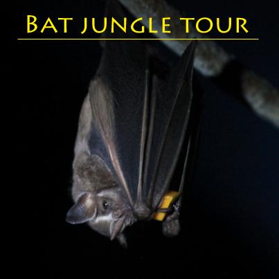 bat tour 01