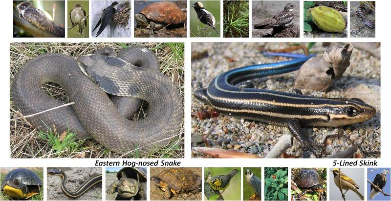 Have You Seen Any Of These Critters Or Plants Halls