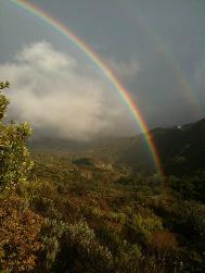 ayapis rainbow