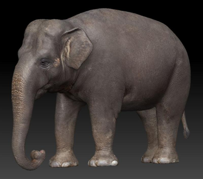 3D Scanned with Lidar like equipment, retopolized and textured.