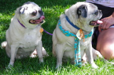 Bowser and Tapanga for Foster of the Month