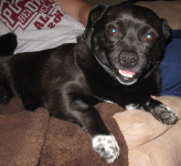 Ancho for Foster of the Month