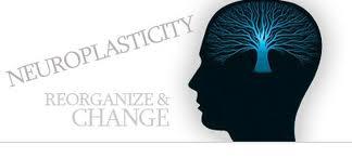 March 21 newsletter, neuroplasticity