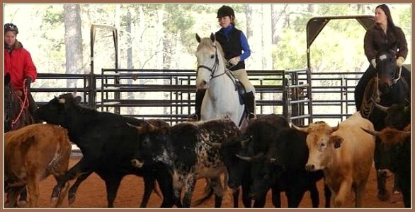 Dressage Herding