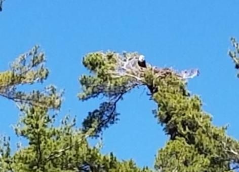 Eagle June 30