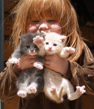 kittens girl