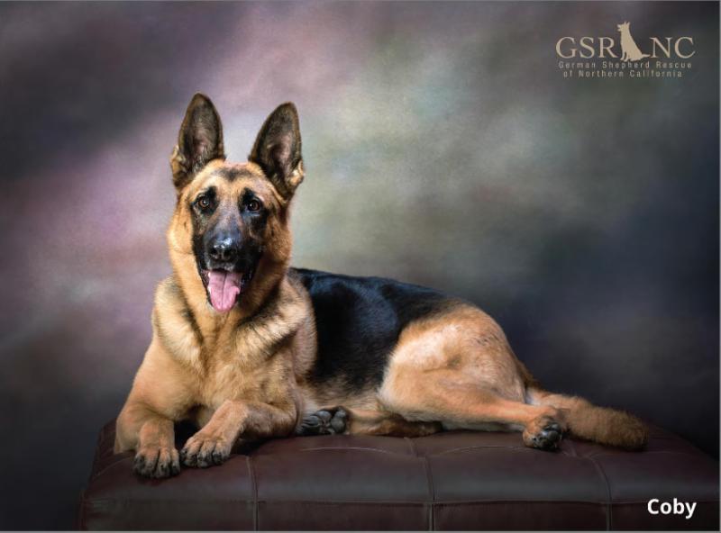 German Shepherd Rescue Of Northern California 2015 Calendar