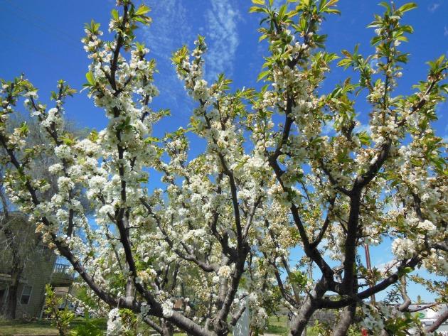 DeyDey's Fruit Trees
