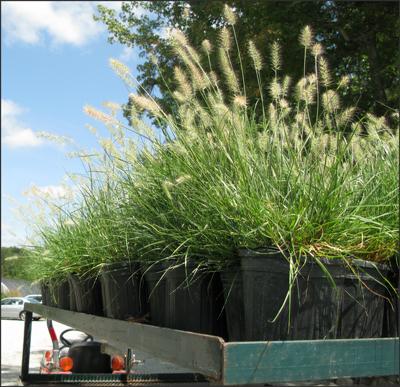 We grow good grass!