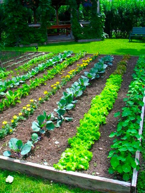 A Grassroots Food Revolution The Modern Victory Garden