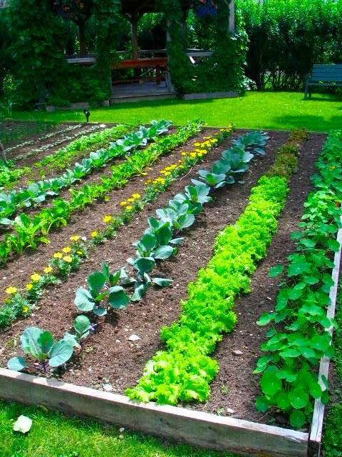 A Grassroots Food Revolution The Modern Victory Garden