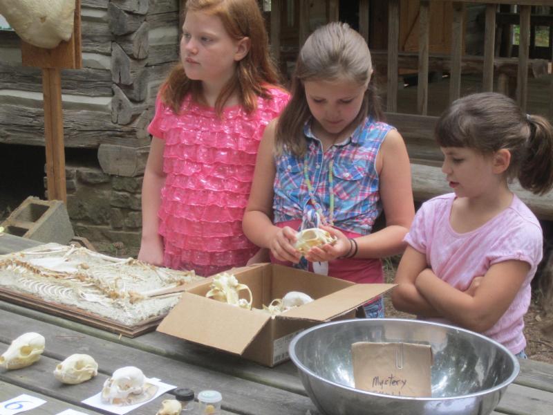Teaching about Animal Bones