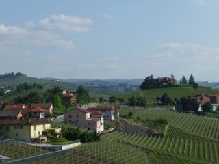 AWE Barbaresco vineyards 1