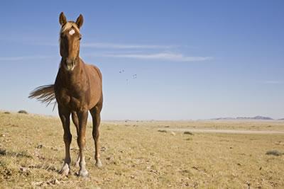 horse-desert.jpg