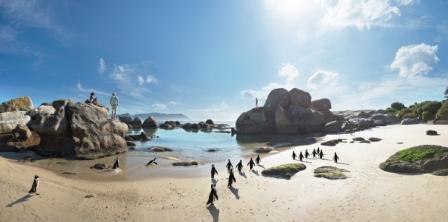 SA Tourism Penguins