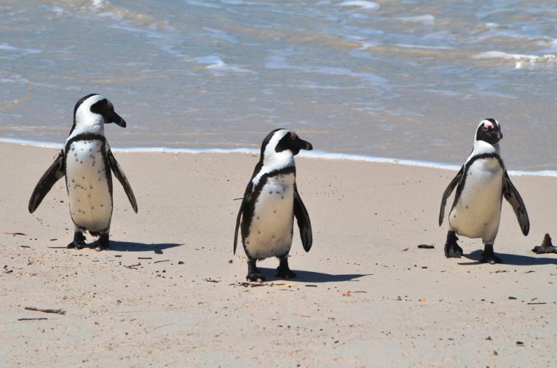 Penguins APTA Forum 2013