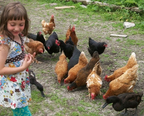 Lily with chickens