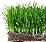 Grass mowing height
