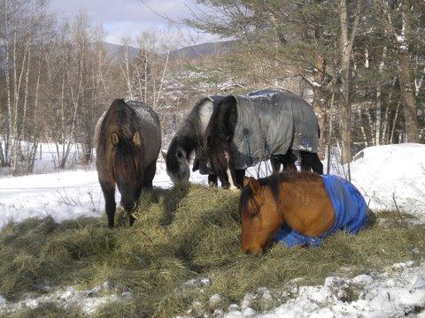 Winter hay