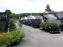 Dana_Greenhouses