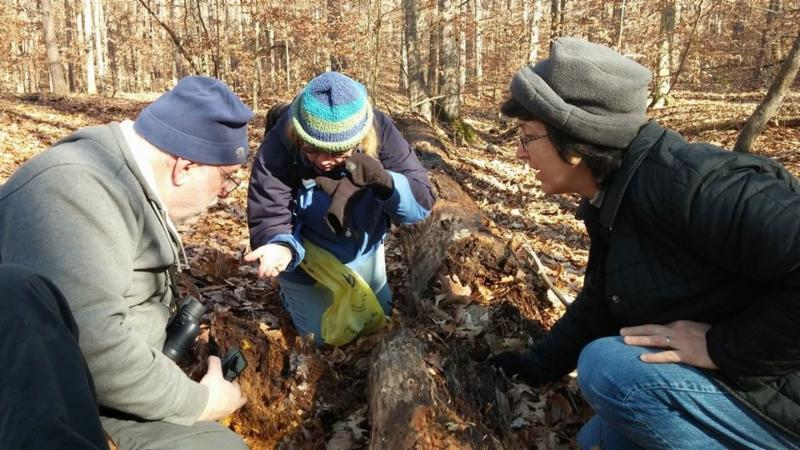 Image of three volunteers looking at rotting log on forest floor.  Photo by Ben Raterman.