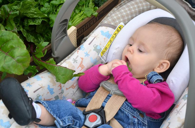 Just Can't Get Enough Baby Grabbing Greens