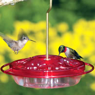 ruby-throated_hummingbird_feeder