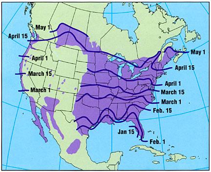 purple_martin_spring_range