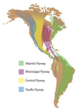 north_america_migration_flyways