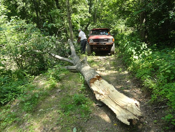 tree down 6/13