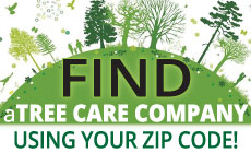 Find a tree care company
