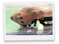 New   Invertebrates