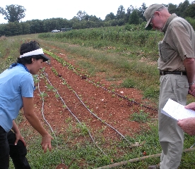 Irrigation at Double H 2009