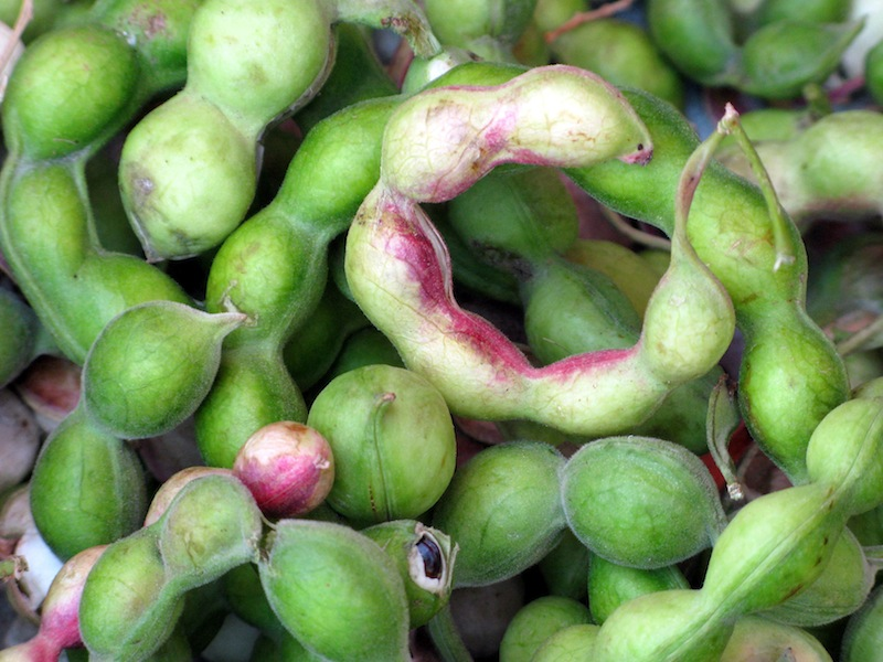 Guamuchil Fruit