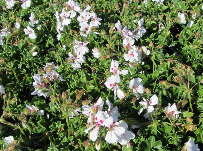 New Availability From Green Meadow Growers