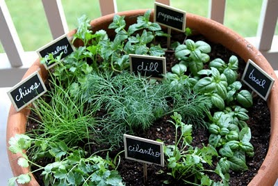 Herb Container From Web 2