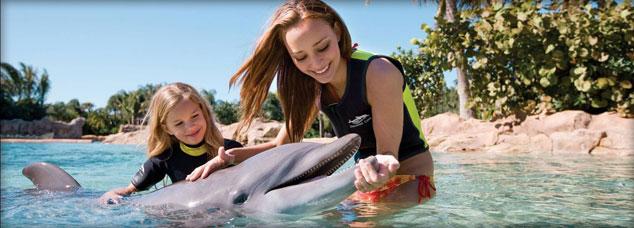 Doubletree Dolphin pix