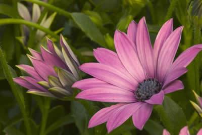 purple-water-flowers.jpg