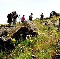 Leiss Ranch Wildflower Walk