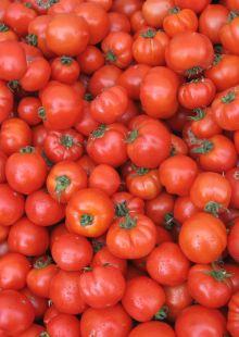 sweet leaf tomatoes