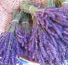 some lavender from dancing light ranch