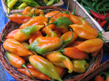 peppers forever
